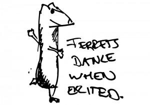 ferret_dancing